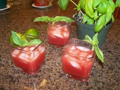 Refreshing Summer Drink – Watermelon – Botanical Gardens